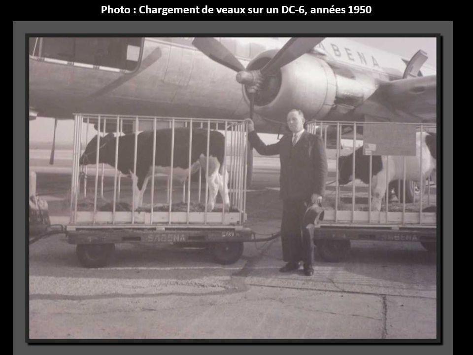 Photo : Chargement de veaux sur un DC-6, années 1950