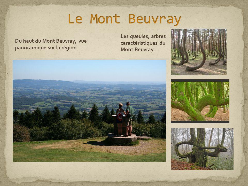 Le Mont Beuvray Les queules, arbres caractéristiques du Mont Beuvray