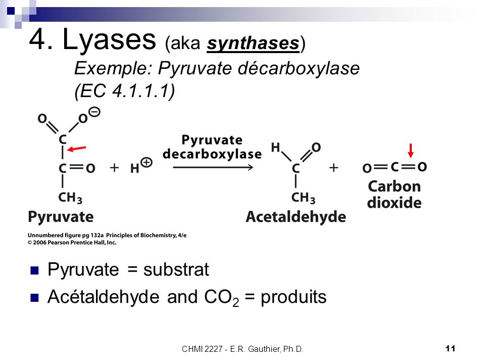4. Lyases (aka synthases) Exemple: Pyruvate décarboxylase (EC 4.1.1.1)