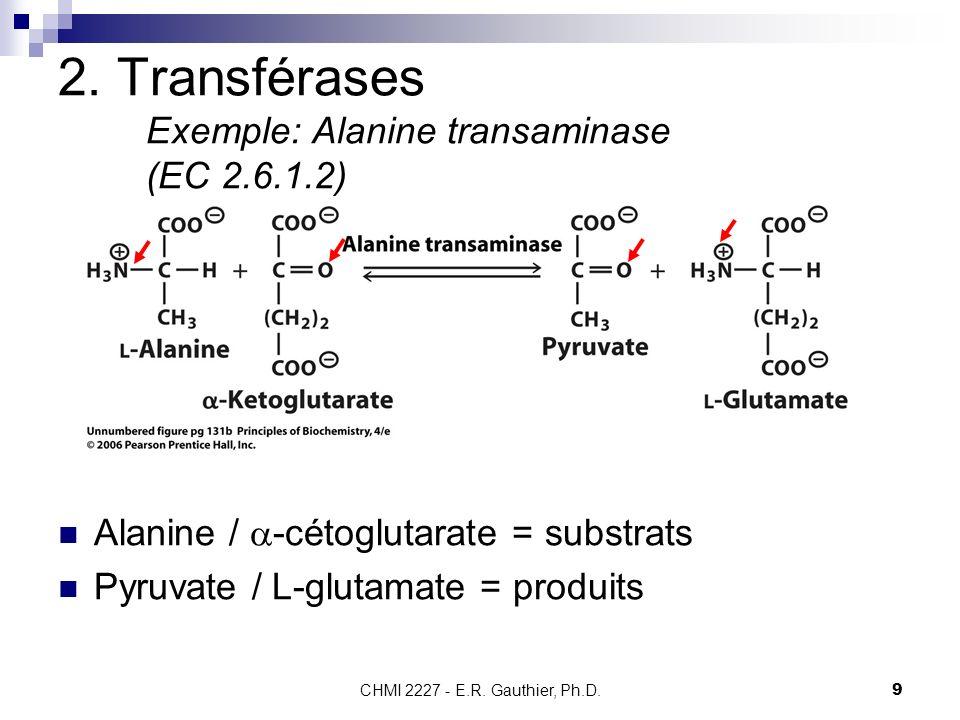 2. Transférases Exemple: Alanine transaminase (EC 2.6.1.2)