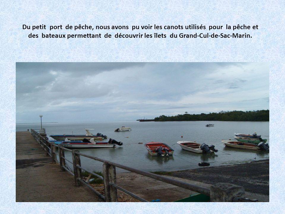 Du petit port de pêche, nous avons pu voir les canots utilisés pour la pêche et des bateaux permettant de découvrir les îlets du Grand-Cul-de-Sac-Marin.