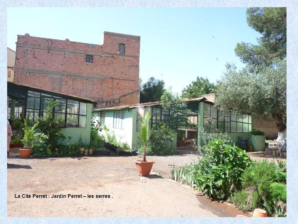 La Cité Perret : Jardin Perret – les serres .