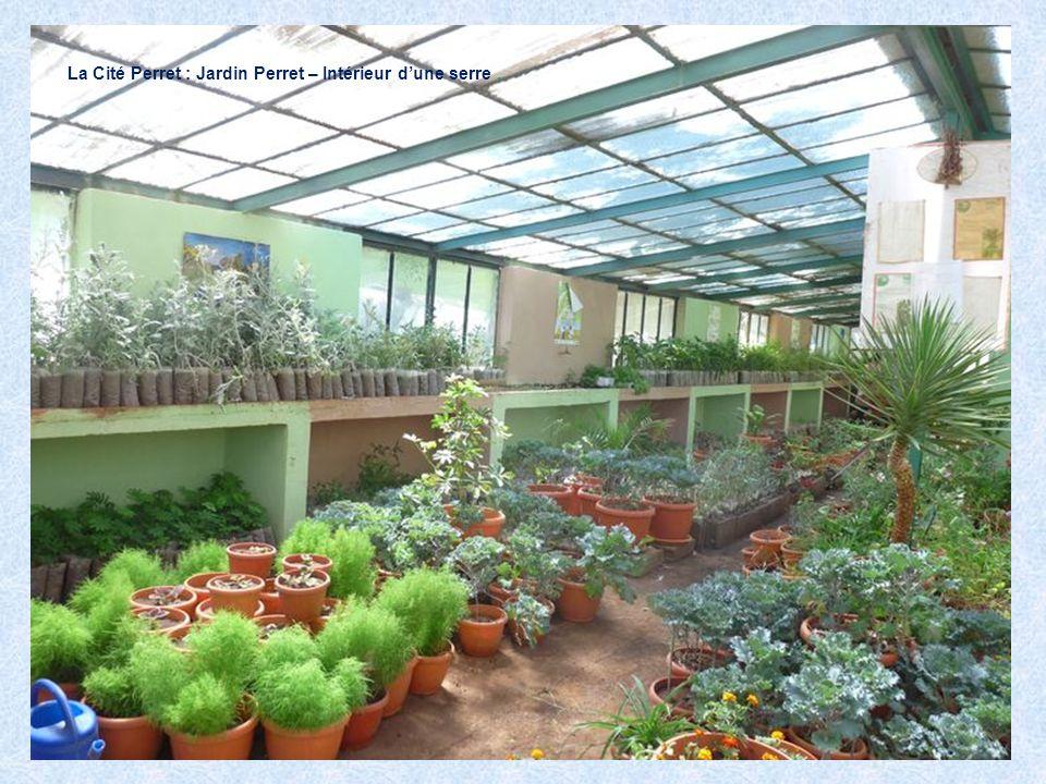 La Cité Perret : Jardin Perret – Intérieur d'une serre .