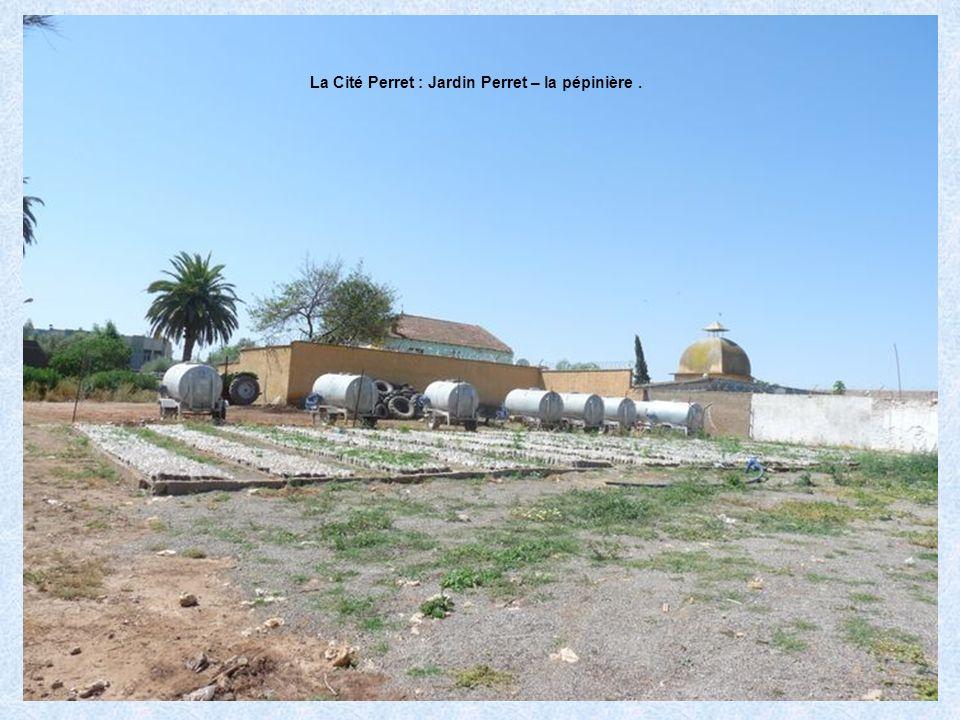 La Cité Perret : Jardin Perret – la pépinière .