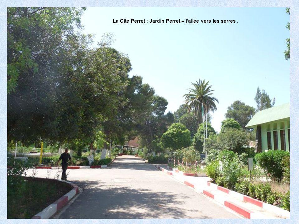 La Cité Perret : Jardin Perret – l'allée vers les serres .