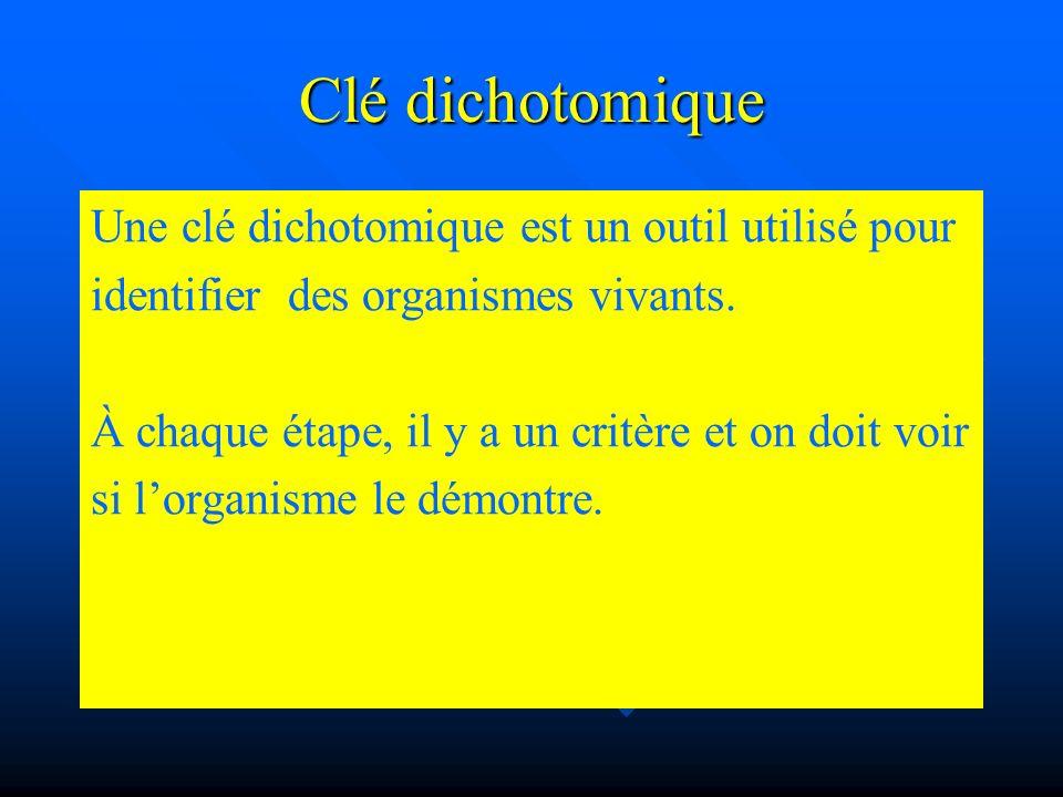 Clé dichotomique Une clé dichotomique est un outil utilisé pour