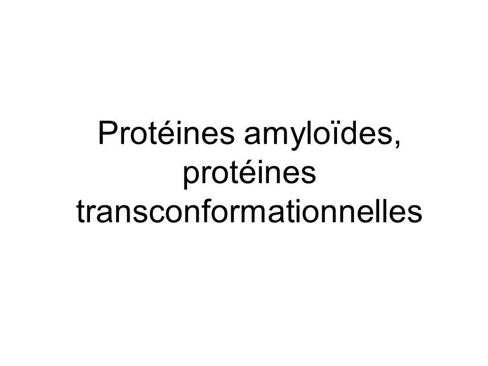 Protéines amyloïdes, protéines transconformationnelles