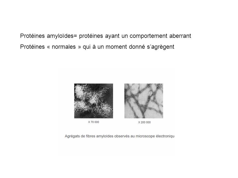 Protéines amyloïdes= protéines ayant un comportement aberrant