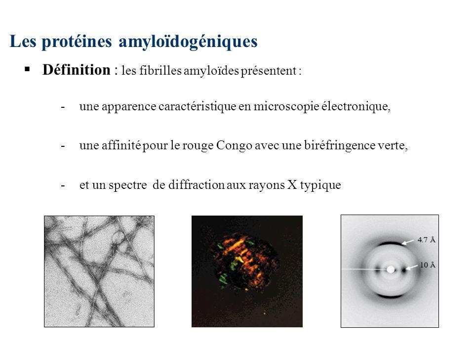 Les protéines amyloïdogéniques