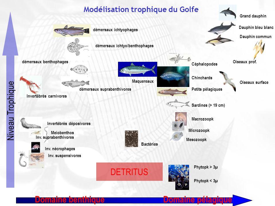 Modélisation trophique du Golfe