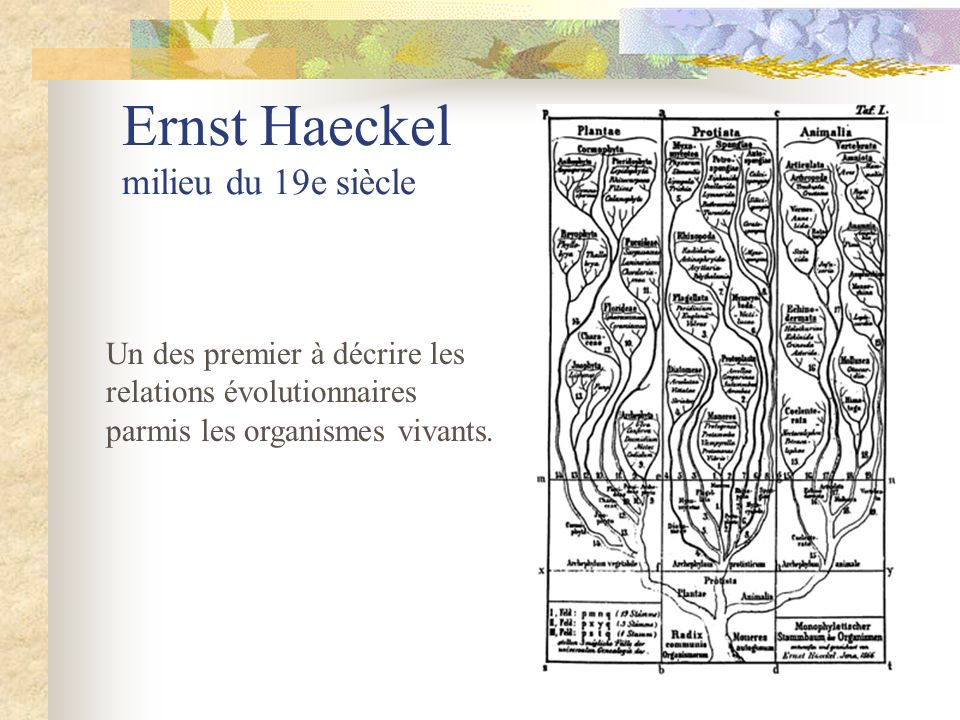 Ernst Haeckel milieu du 19e siècle