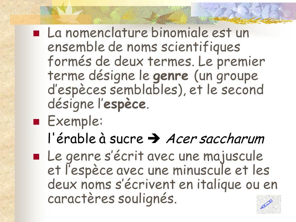 La nomenclature binomiale est un ensemble de noms scientifiques formés de deux termes. Le premier terme désigne le genre (un groupe d'espèces semblables), et le second désigne l'espèce.