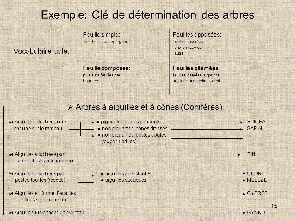 Exemple: Clé de détermination des arbres