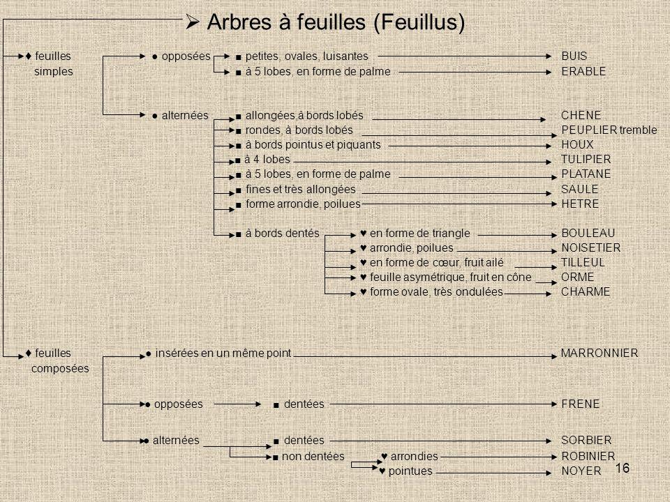  Arbres à feuilles (Feuillus)