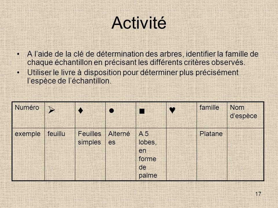 Activité A l'aide de la clé de détermination des arbres, identifier la famille de chaque échantillon en précisant les différents critères observés.