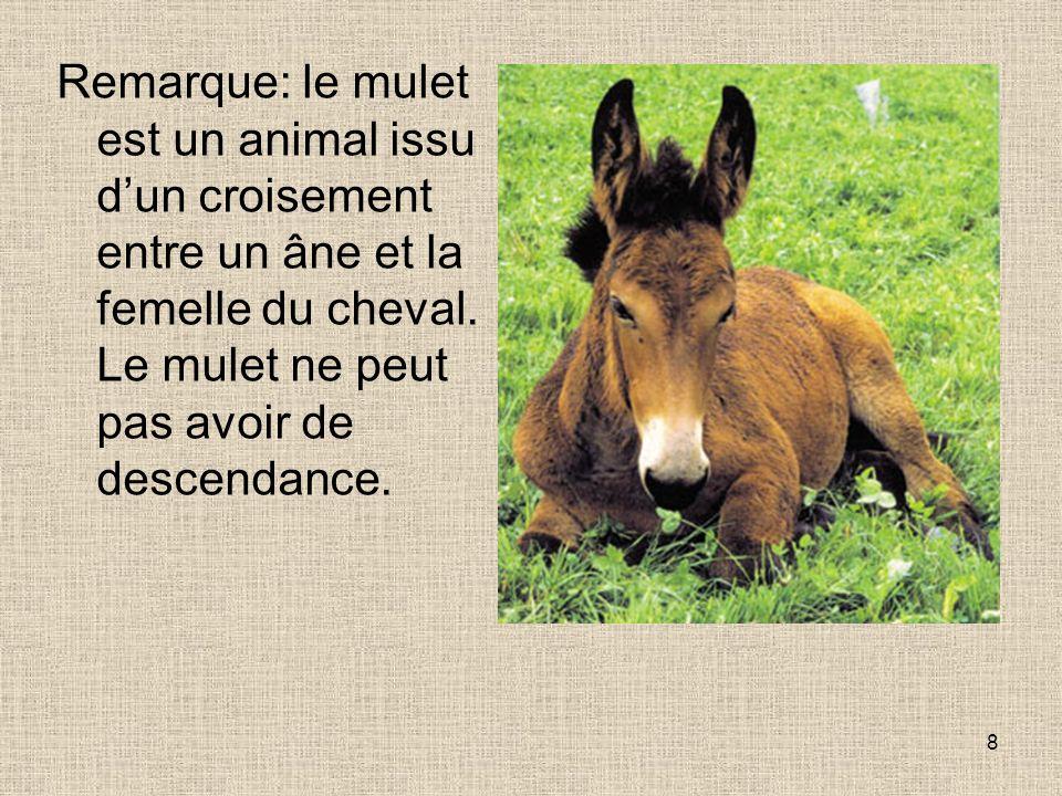 Remarque: le mulet est un animal issu d'un croisement entre un âne et la femelle du cheval.
