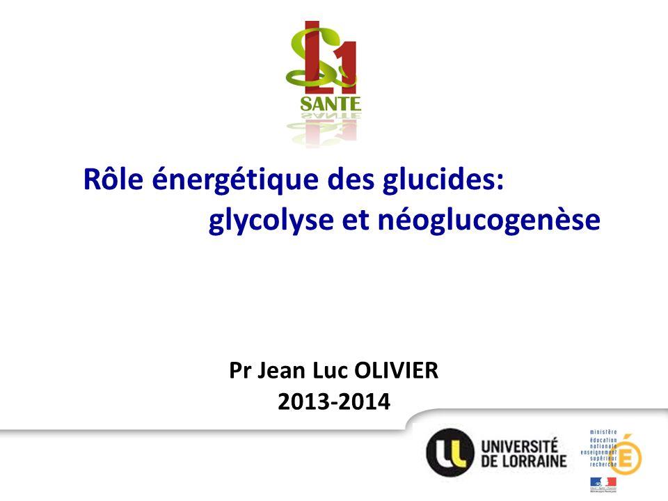 Rôle énergétique des glucides: glycolyse et néoglucogenèse