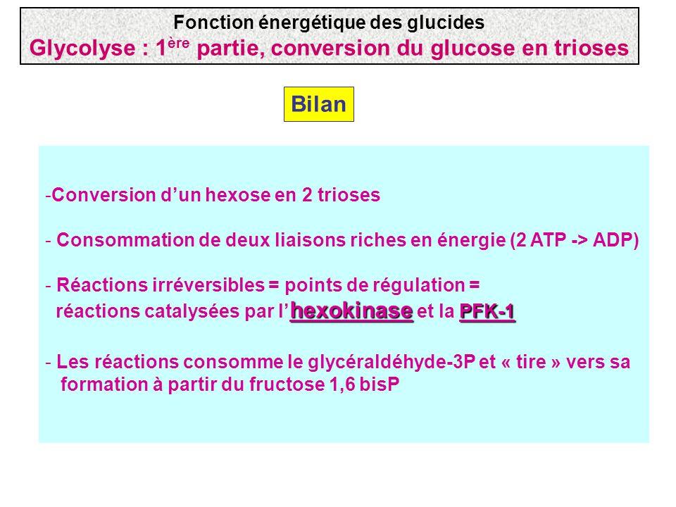 Glycolyse : 1ère partie, conversion du glucose en trioses