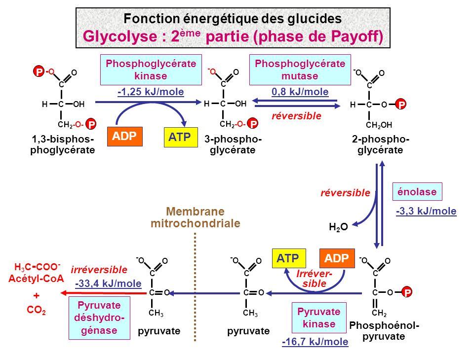 Glycolyse : 2ème partie (phase de Payoff)
