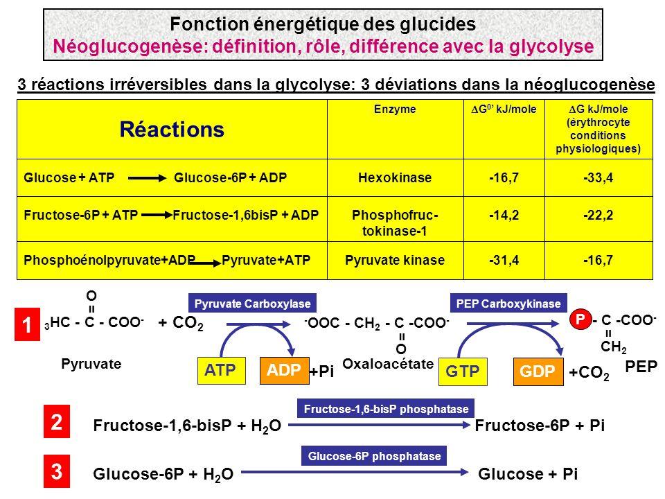 Réactions 1 2 3 Fonction énergétique des glucides