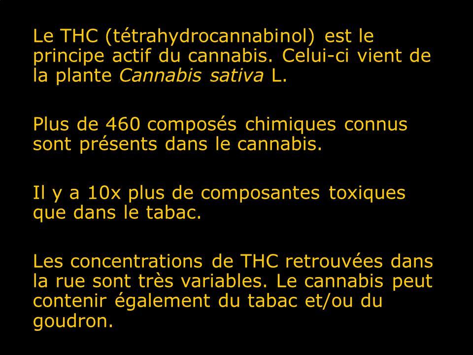 Plus de 460 composés chimiques connus sont présents dans le cannabis.