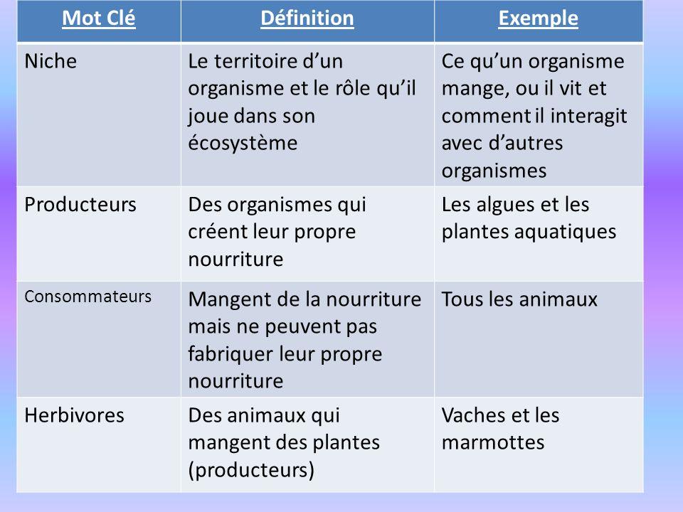 Mot Clé Définition Exemple