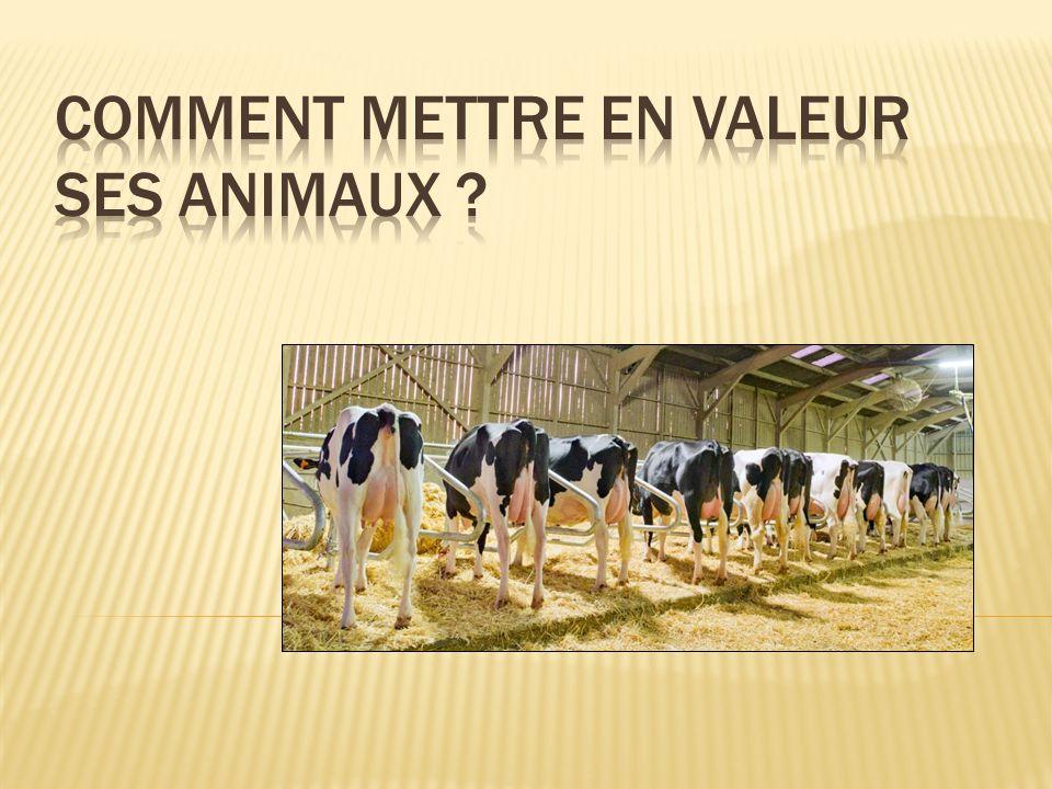 COMMENT METTRE EN VALEUR SES ANIMAUX