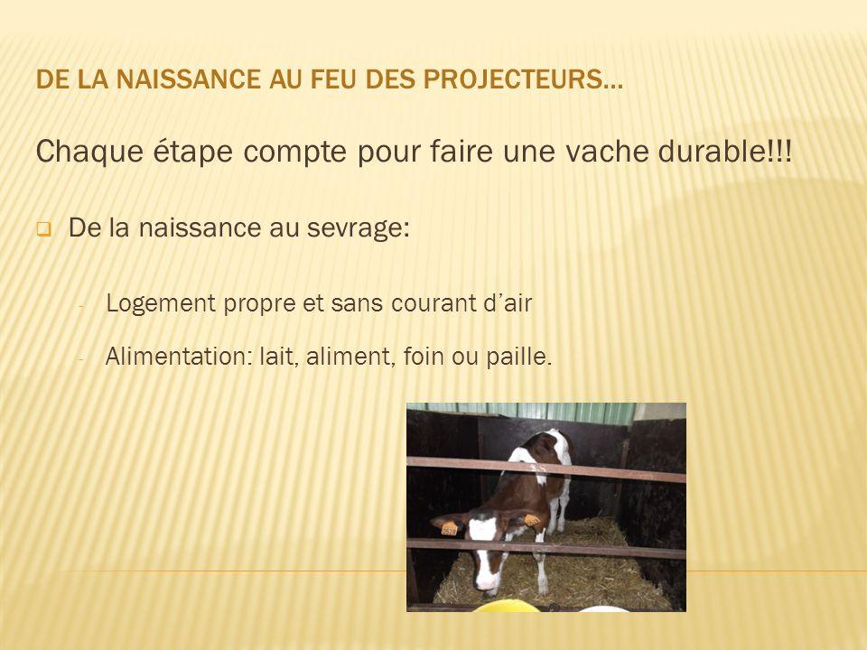 Chaque étape compte pour faire une vache durable!!!