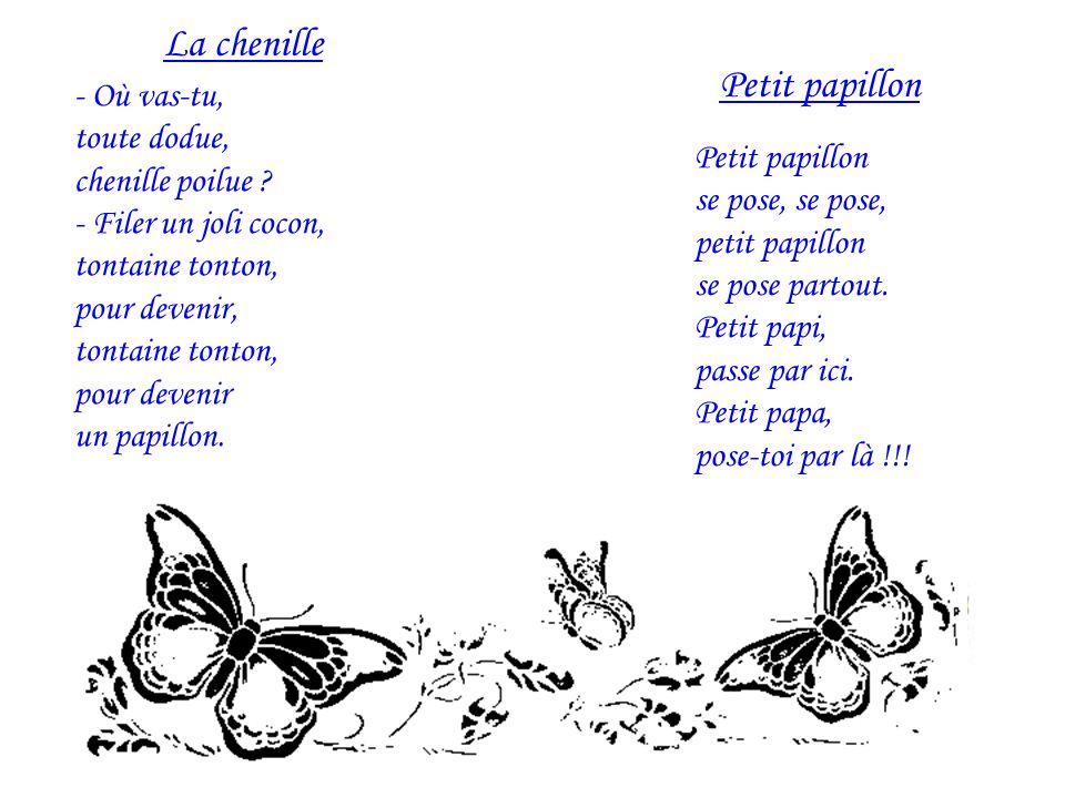 La chenille Petit papillon - Où vas-tu, toute dodue, chenille poilue