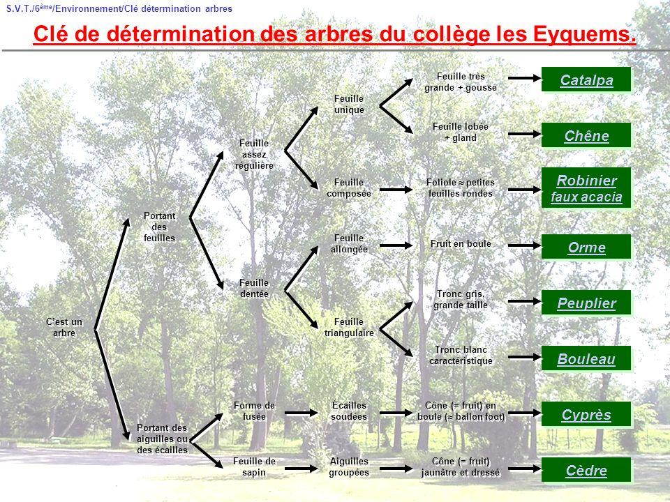 Clé de détermination des arbres du collège les Eyquems.
