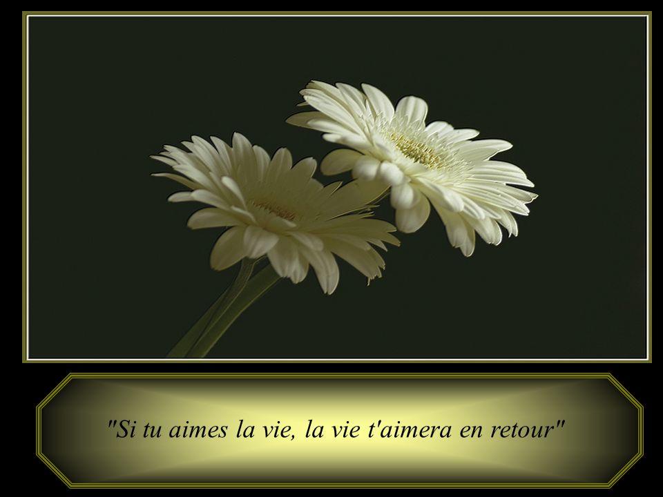 Si tu aimes la vie, la vie t aimera en retour