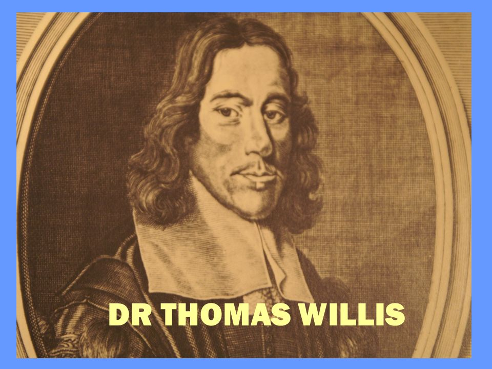 DR THOMAS WILLIS