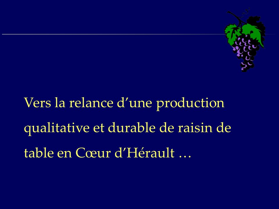 Vers la relance d'une production qualitative et durable de raisin de table en Cœur d'Hérault …