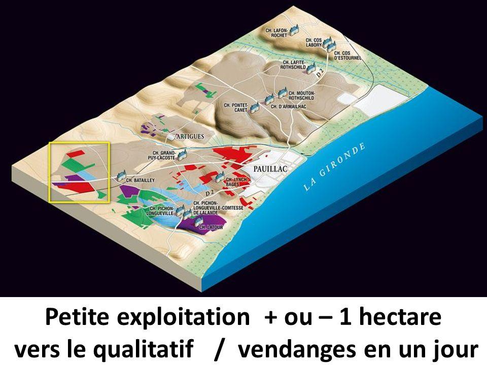 Petite exploitation + ou – 1 hectare
