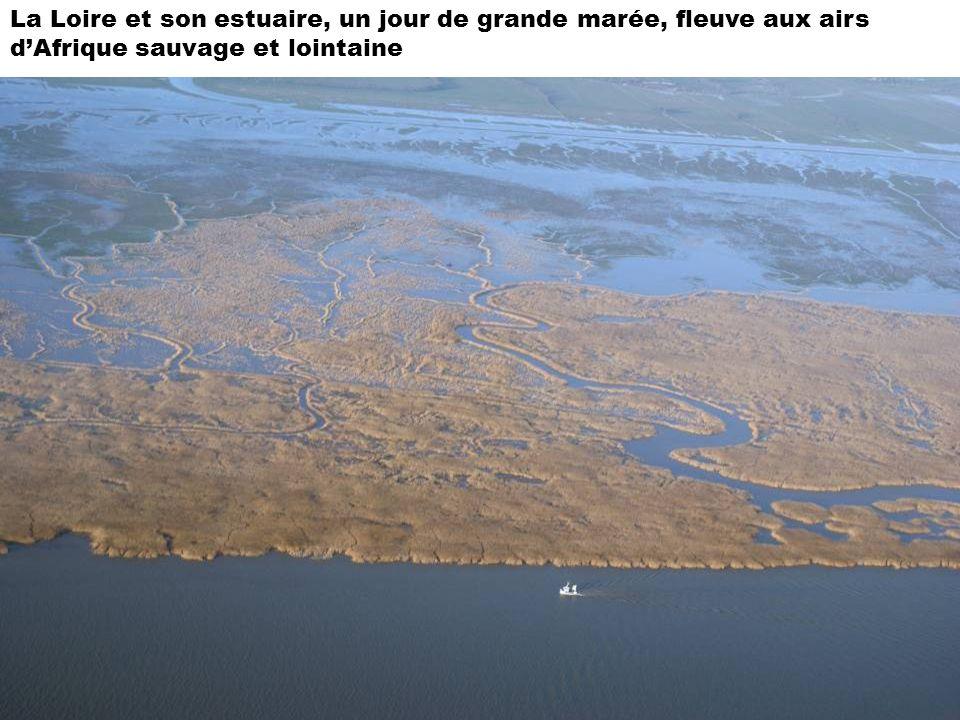 La Loire et son estuaire, un jour de grande marée, fleuve aux airs d'Afrique sauvage et lointaine