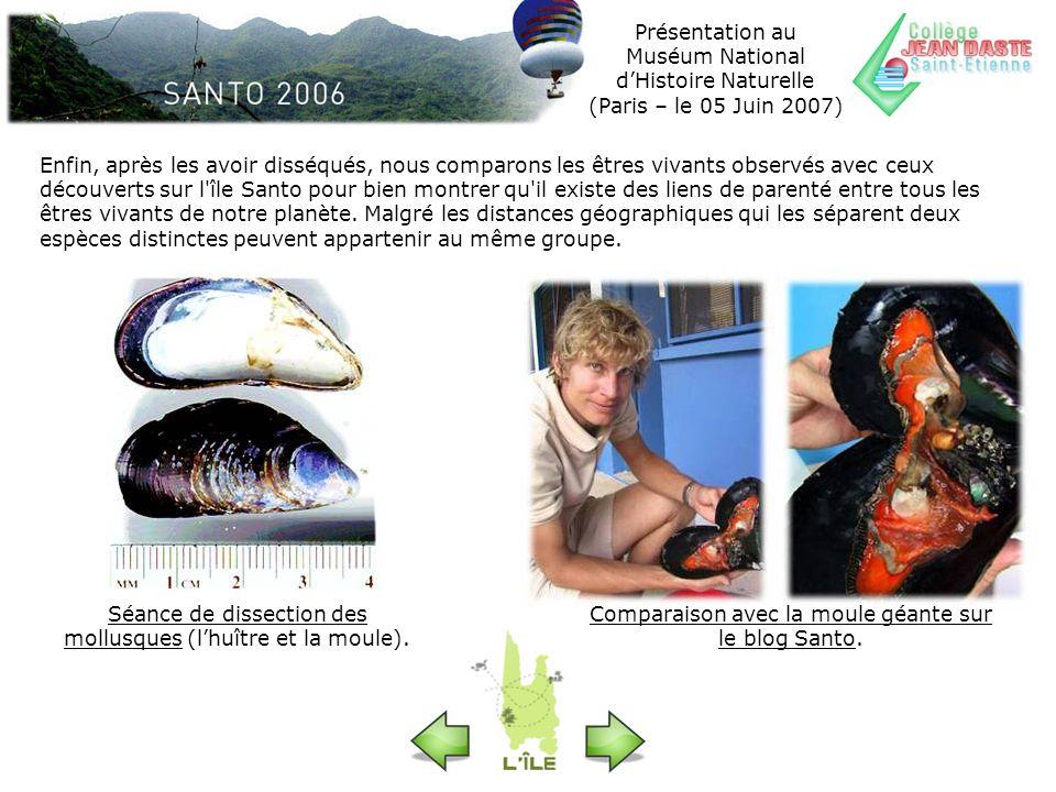 Séance de dissection des mollusques (l'huître et la moule).