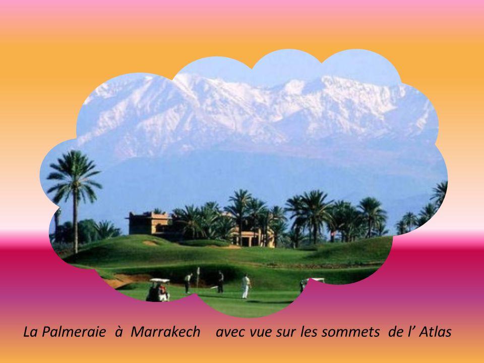 La Palmeraie à Marrakech avec vue sur les sommets de l' Atlas