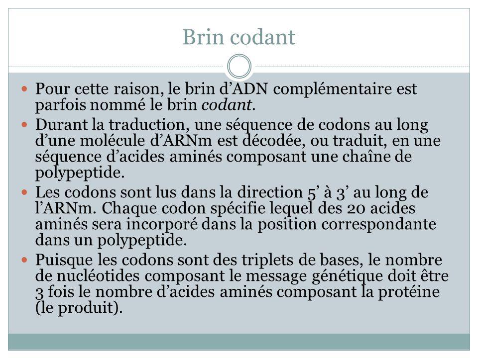 Brin codant Pour cette raison, le brin d'ADN complémentaire est parfois nommé le brin codant.