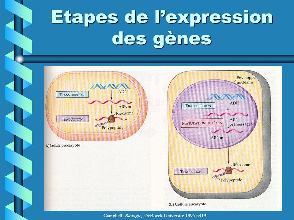 Etapes de l'expression des gènes