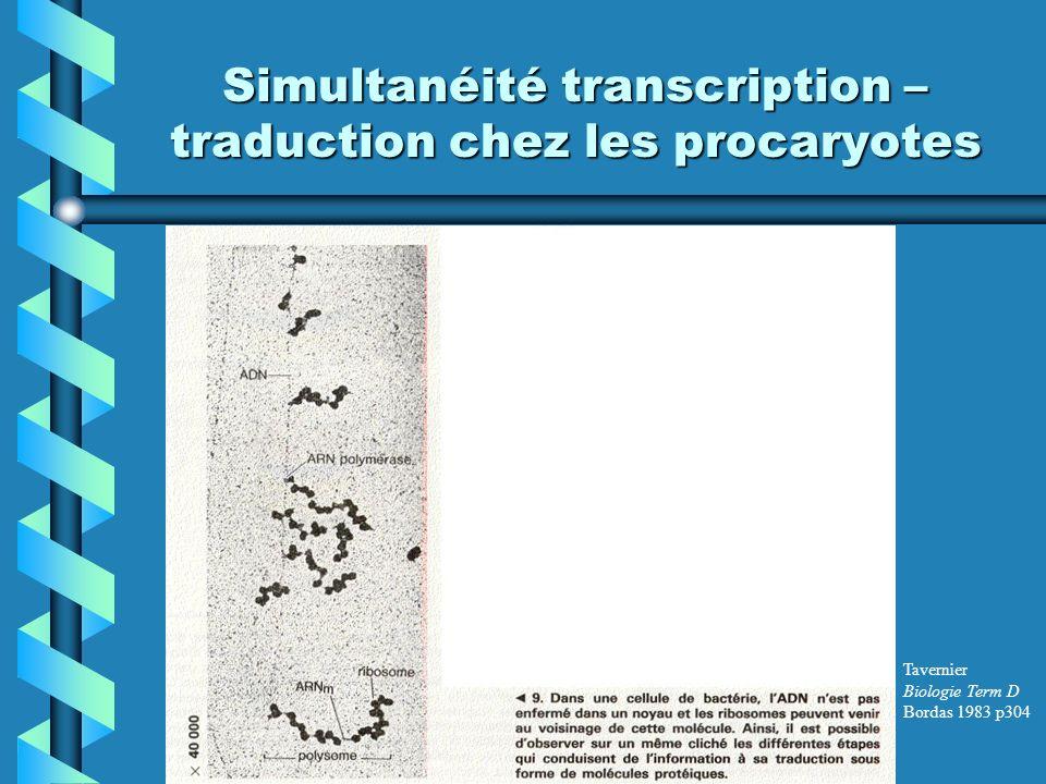 Simultanéité transcription –traduction chez les procaryotes