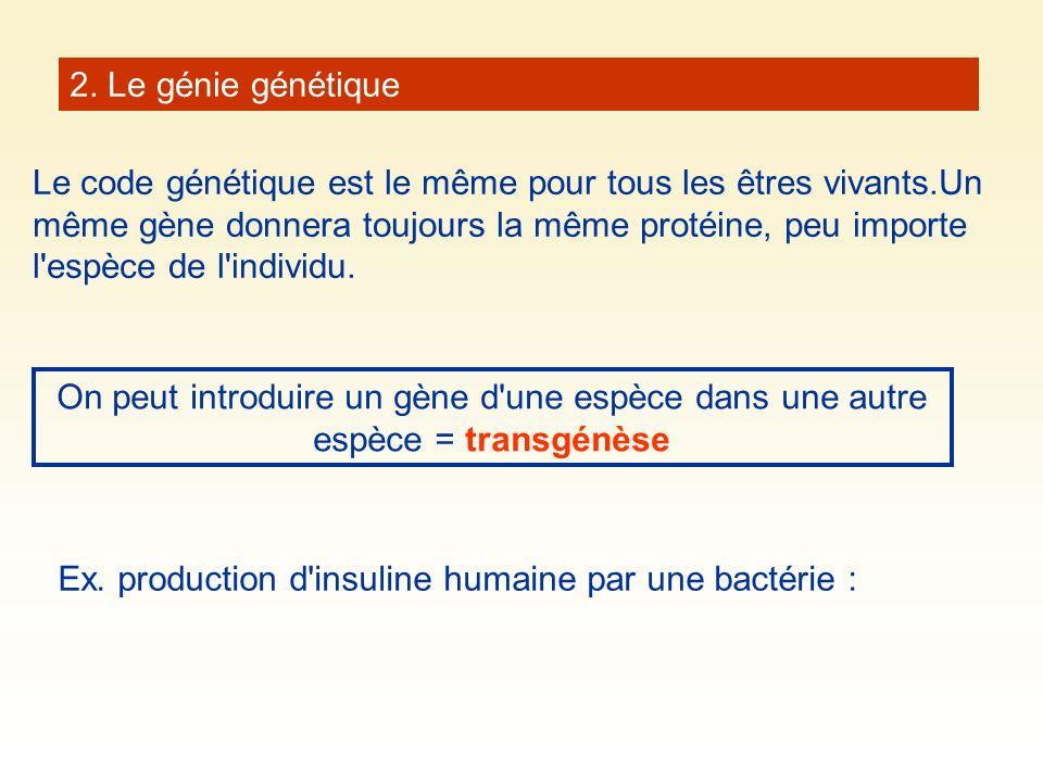 2. Le génie génétique