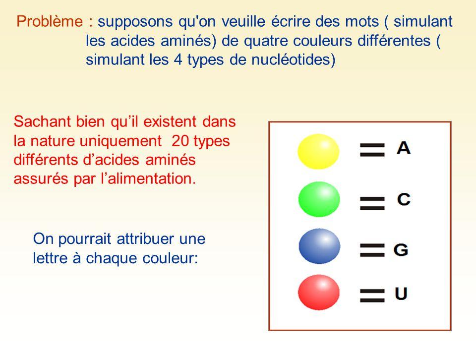 Problème : supposons qu on veuille écrire des mots ( simulant les acides aminés) de quatre couleurs différentes ( simulant les 4 types de nucléotides)