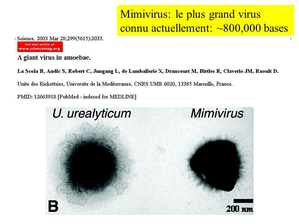 Mimivirus: le plus grand virus connu actuellement: ~800,000 bases