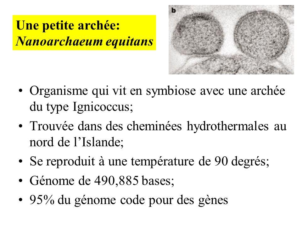 Une petite archée: Nanoarchaeum equitans