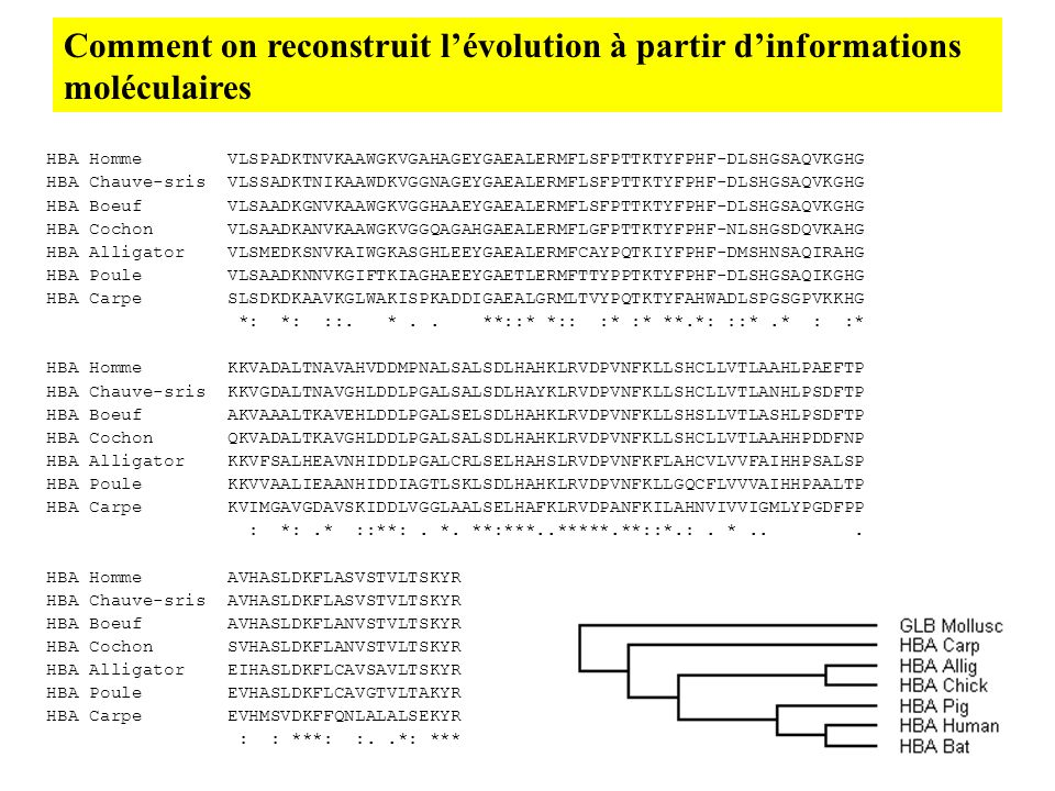 Comment on reconstruit l'évolution à partir d'informations moléculaires