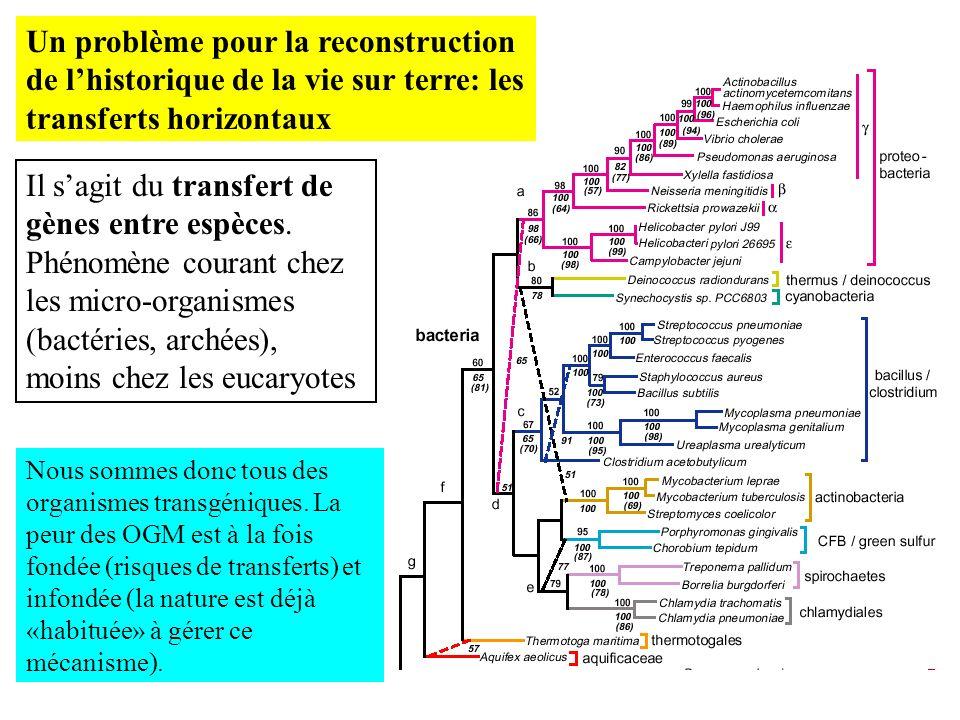 Un problème pour la reconstruction de l'historique de la vie sur terre: les transferts horizontaux