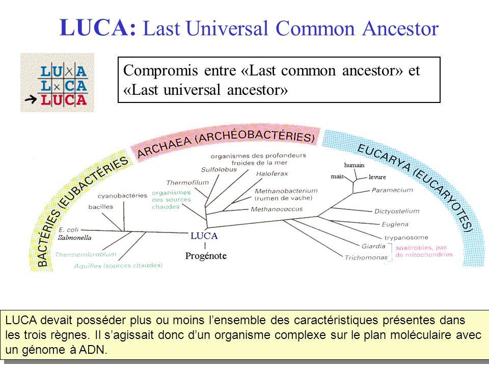 LUCA: Last Universal Common Ancestor