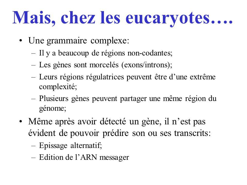 Mais, chez les eucaryotes….