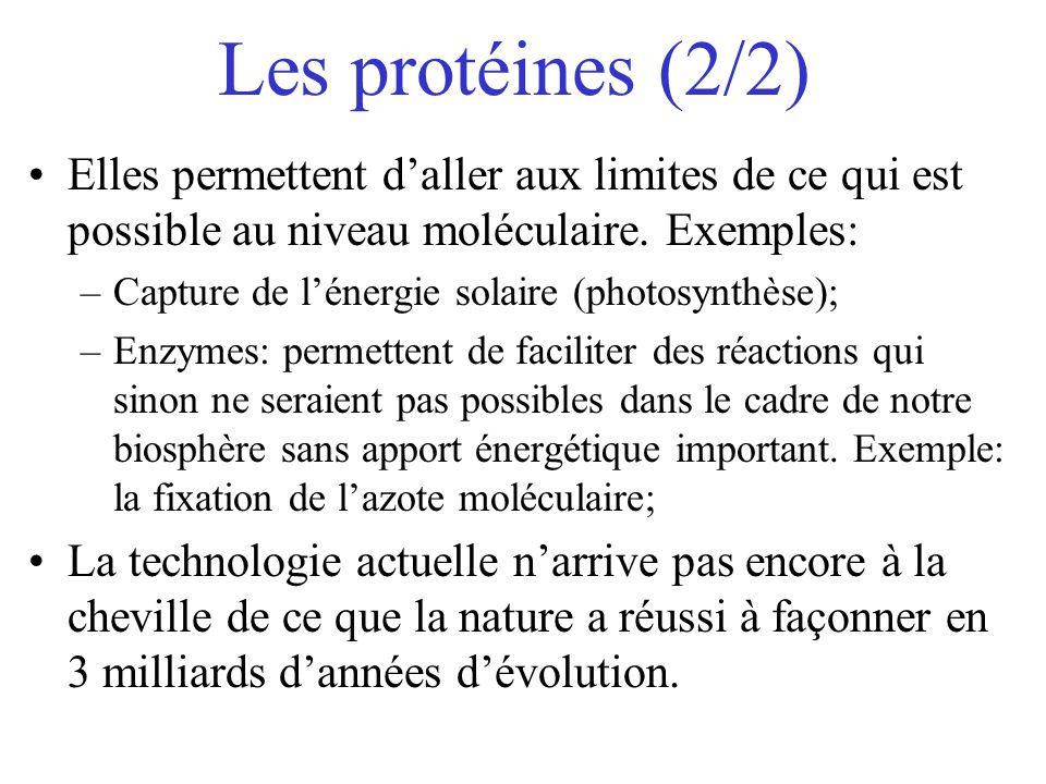 Les protéines (2/2) Elles permettent d'aller aux limites de ce qui est possible au niveau moléculaire. Exemples:
