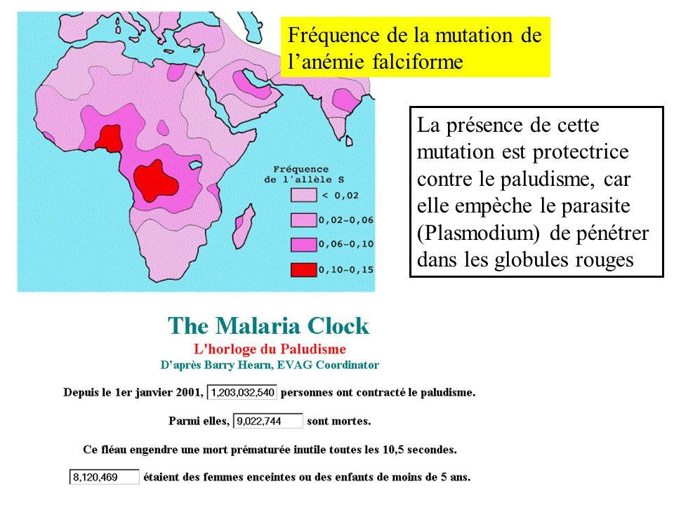 Fréquence de la mutation de l'anémie falciforme